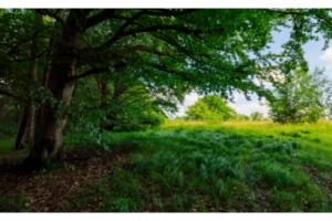 shade under a tree